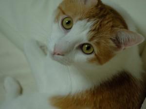 cat muu photo
