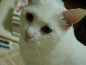 cats toro photo
