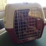 居候24日目… 動物病院にて初めての診察