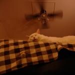 久しぶりに一眼レフで猫の写真を撮ってみた