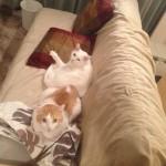 猫 と OB(アウト・オブ・バウンズ)