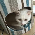 猫 と 指定席