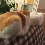 猫 と 距離感