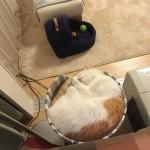 猫 と 晩酌