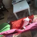 猫 と 電気代
