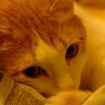猫 と 単焦点レンズ