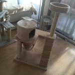 猫 と キャットタワー