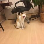 猫 と 略奪