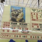 猫 と 売れ残り