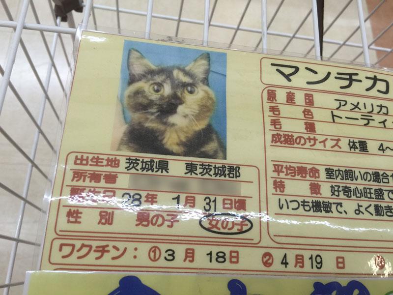 ペット ショップ 売れ残り 猫 里親