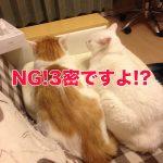 昔の姿で出演しました… 猫とソーシャルディスタンス!?